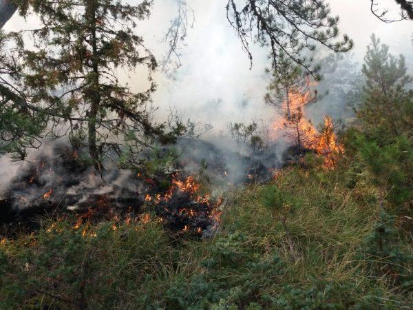 VIDEO  Vihet nën kontroll zjarri në Nikolicë të Devollit